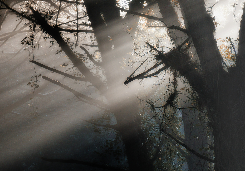 tra luce e nebbia