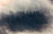 i signori della nebbia