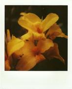 Instant Herbarium