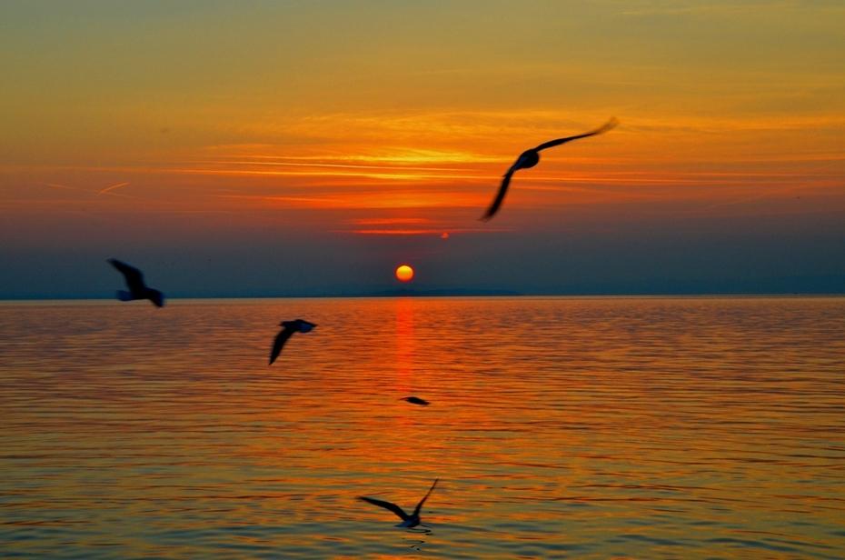 3-2-Gabbiani al tramonto