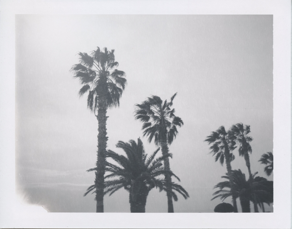 the southern palms