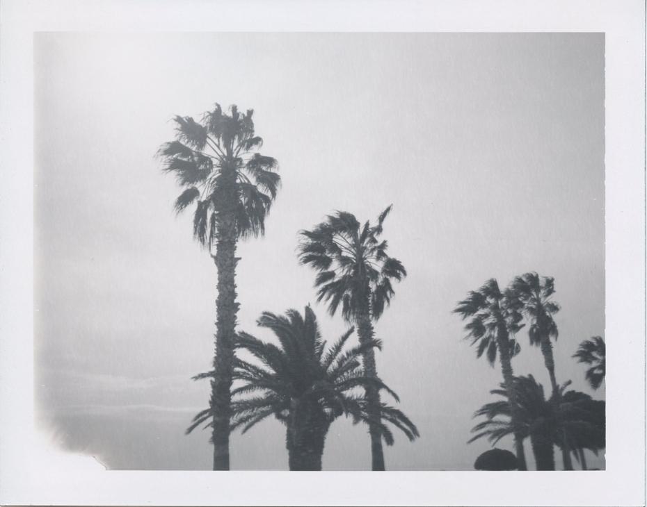 the southern palms