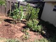My Compost Garden