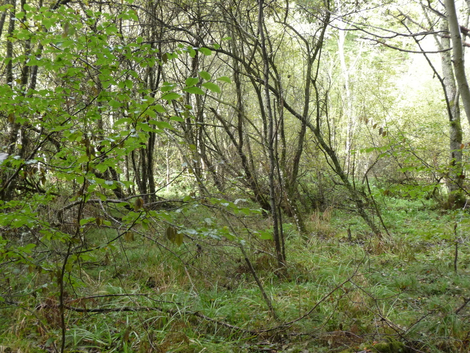 Ten Directions, a swamp in toncais forest