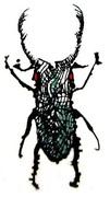 El escarabajo en el mundo/The beetle in the world//e dendroctone dans le monde